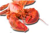 Menorca hummer lobster