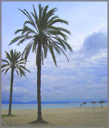 Menorca palmer strand